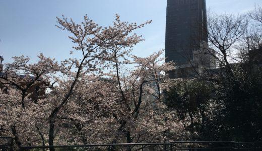 桜色舞うころに思い出す大林君とホセ