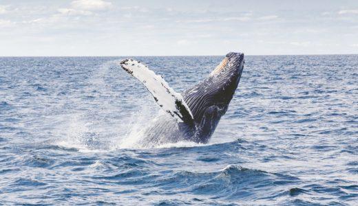 窪美澄『晴天の迷いクジラ』感想文:苦しくて苦しくて苦しくて堪らない作品に救いはあるのか?