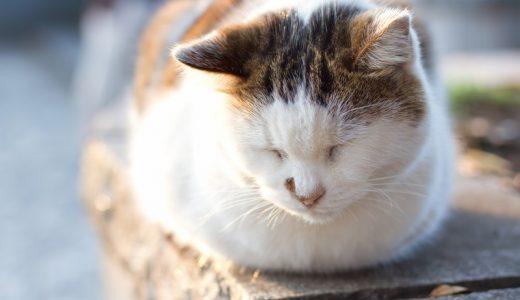 有川浩『旅猫リポート』原作感想文|猫好きな人間としてはフィクションだから全力で感情移入できるという考え方もある